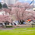 Photos: 桜の時期、水の塔から見下ろした落合公園(2015/4/7)No - 34