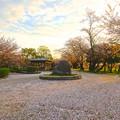 写真: 落合公園:夕暮れ時、散り際の桜(2015/4/8)No - 01