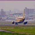 写真: エアフロントオアシス(小牧市):県営名古屋空港から飛び立つ、黄色のFDA機 - 5