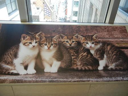 子猫は可愛い(=^・^=)