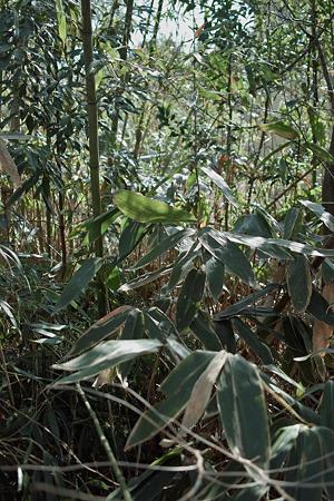 Bamboo02222012dp2-02