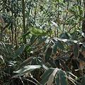 Photos: Bamboo02222012dp2-02