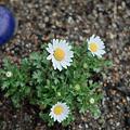 Photos: flower03242012dp2-05