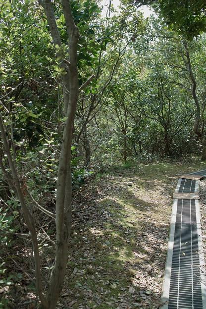 Photos: trees04022012dp2-03