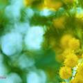 Mimoza.......