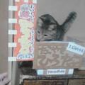 写真: 今朝、隣の小3にプレゼントしたたこ焼き屋の看板w。