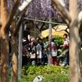 Photos: 藤見鳥