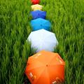 Photos: Stripe of the umbrella(1)