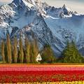 Beautiful landscape(8)