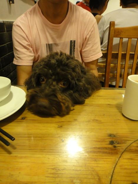 写真: テーブルの上に頭をのっけるMOMOさん