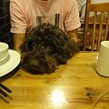 Photos: テーブルの上に頭をのっけるMOMOさん