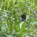 Photos: 野草とクロツくん