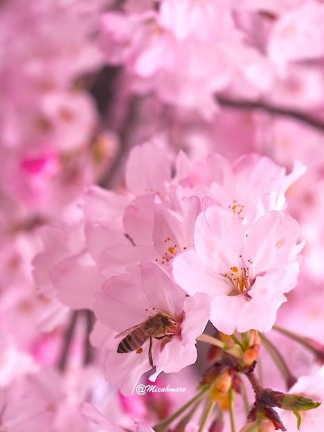 Dance of a bee1