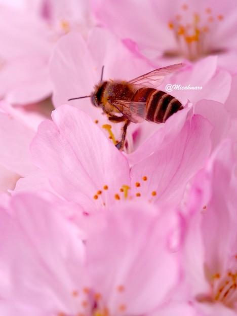 Dance of a bee5
