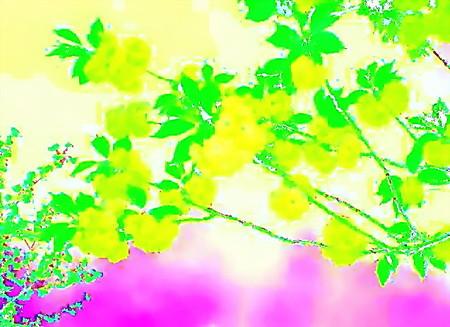 花のことば-01_初戀