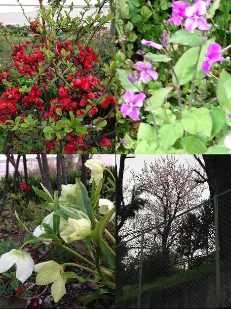 写真: 春の花2