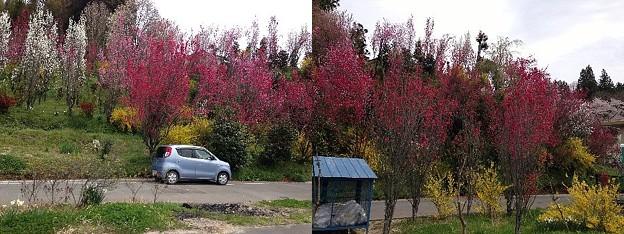 写真: 花やしき公園
