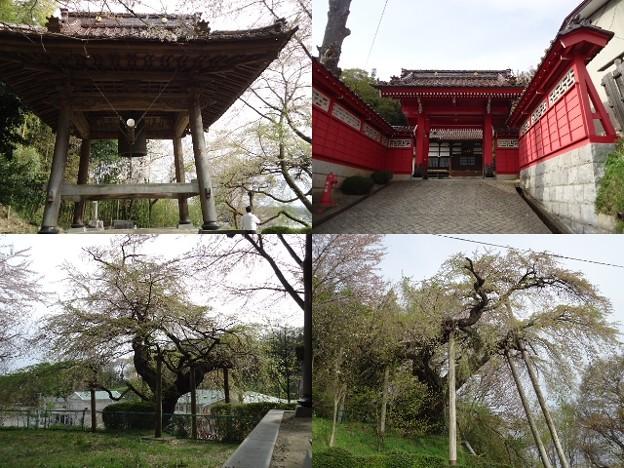 写真: 蓮華寺