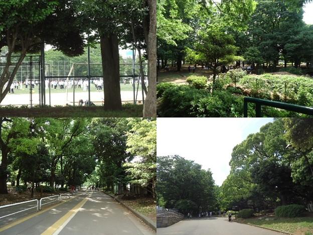 写真: 駒沢公園