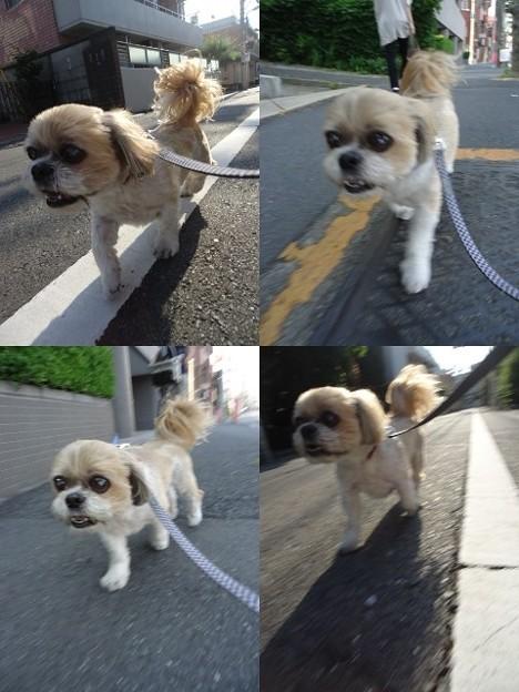 写真: お散歩トラッチ