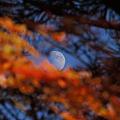月と紅葉の天の川