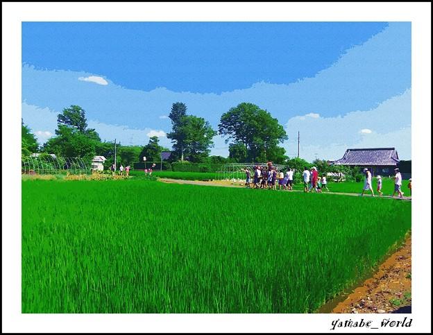 Photos: 夏 まつり 徒行