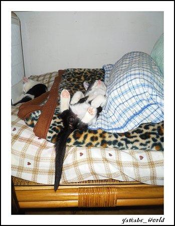 ゆうちゃんの寝相