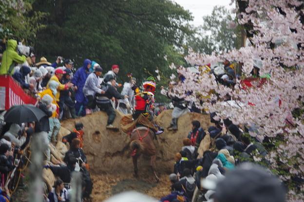 IMGP9621 猪名部神社の上げ馬神事その8