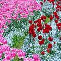 春爛漫27