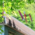 Photos: ミドリさわやか♪