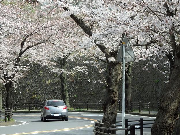 桜トンネルを行くDEMIO^^