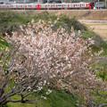 梅花盛りを過ぎて