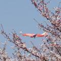 桜とFDA機