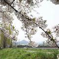 桜と電車その2