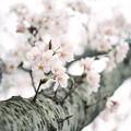 Photos: New FM2で撮った春 02
