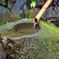 苔むす手水鉢