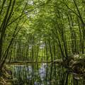 Photos: 新緑の美人林