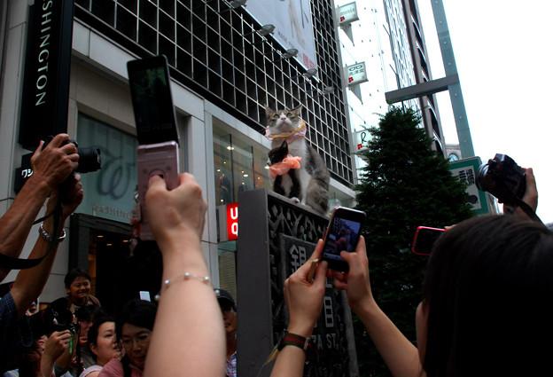 Photos: 銀座のスター