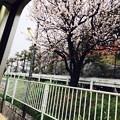 ドアが開いた瞬間、春が飛びこんできた