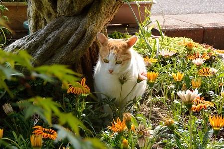 花壇となおきくん