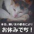 写真: 3月19日はお休みでち(w)