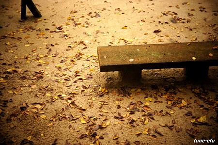 公園に秋の雨