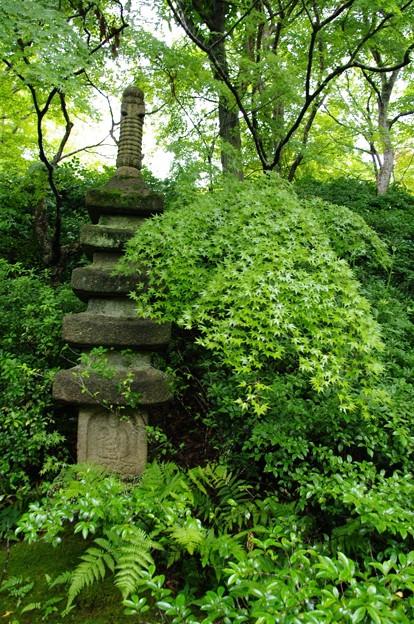 写真: 庭園2