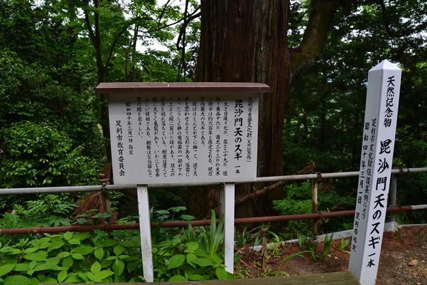 Photos: 大岩毘沙門天のスギ