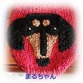 Photos: まるちゃん