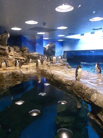 20110815 海響館 亜南極水槽02