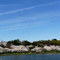 Photos: 春トレイル