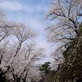 Photos: 2015桜_小諸2