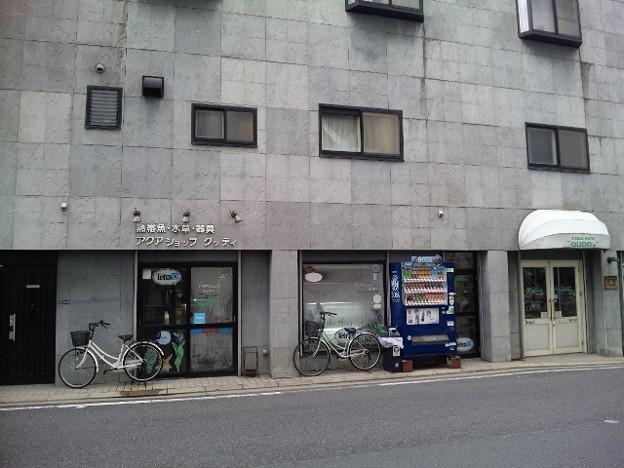 Photos: 20120317 熱帯魚店グッディ