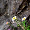 Photos: 花凜